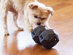 A modern, attractive puzzle ball that keeps dogs busy and using their brains. Fill it with treats or food and watch the fun.