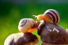 The most amazing photos of close up snails