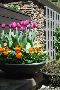Tulips, perennial bulbs, container gardening, landscape architecture, landscape design