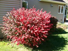 Beautiful bright red of fall