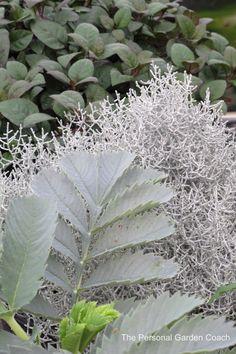 #Silver #Foliage