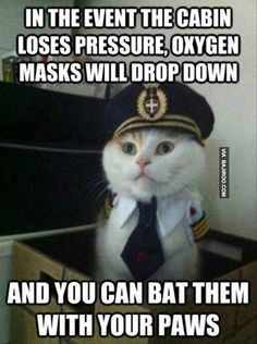 In the event the cabin loses pressure, oxygen masks will drop down... #catoftheday