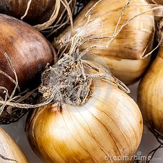 Details of small brown root onions.
