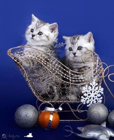 ♥ For more fun holiday cats, visit https://www.facebook.com/funholidaycats