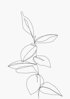 The Colour Study - A4 White Paper Plant Line Drawing Illustration Art Print by Berry - A4 | paper | white - White/White Leaf Drawing, Plant Drawing, Colour Drawing, Line Drawing Art, Watch Drawing, Botanical Line Drawing, Single Line Drawing, Continuous Line Drawing, Cuadros Diy