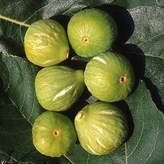 Ficus carica 'Gentile' of 'Brogiotto Bianco' - Vijg kopen Fresh Figs, Fresh Fruit, Winter Painting, Raised Garden Beds, Honeydew, Vegetable Garden, Mecca Kaaba, Vegetables, Green