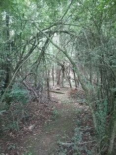 My path into the woods.