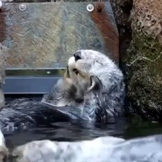 Baby Animals Pictures, Cute Animal Pictures, Animals And Pets, Wild Animals, Nature Animals, Funny Pictures, Cute Little Animals, Cute Funny Animals, Funny Pets