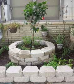 6/20/2016   front yard Project