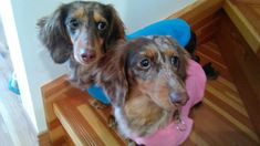 Coco with her sister Tina