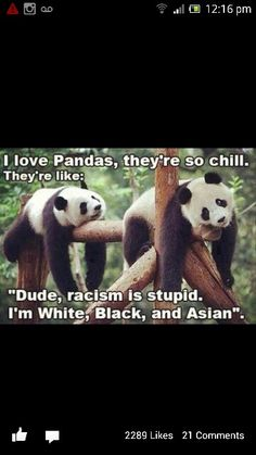 Funny pandas Could not be better said! Let's all live like PANDA'S! Animal Memes, Funny Animals, Cute Animals, Animal Humor, Rock Animals, Wild Animals, Baby Animals, Photo Panda, Jm Barrie
