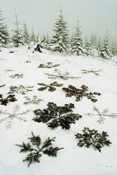 Make giant snowflakes with branches and sticks. Form giant snowflakes with branches and sti Winter Fun, Winter Time, Winter Christmas, Winter Holidays, Christmas Stars, Natural Christmas, Winter Magic, Thanksgiving Holiday, Outdoor Christmas