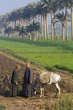 Two men and a donkey in the fields outside Saqqara, Egypt