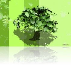 Free animation for digital frame. Green Trees, Herbs, Animation, Digital, Videos, Frame, Artist, Artists, Herb