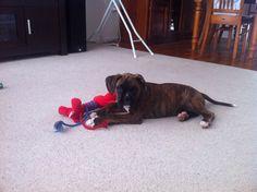 Astro loving his new toy