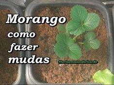 Como tirar sementes de morango e germinar/ How to make strawberry seeds and germinate - YouTube