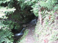 両神山へと続く山道。