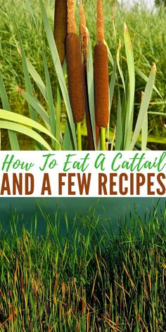 How To Eat A Cattail And A Few Recipes - Cattails hold a lot of minerals that we will need if SHTF, the top one being Manganese 11 RDV. I found a great article that shows you how to strip the plant down and get it ready for consumption. Survival Food, Survival Prepping, Survival Skills, Wilderness Survival, Emergency Preparedness, Survival Hacks, Healing Herbs, Medicinal Plants, Edible Wild Plants