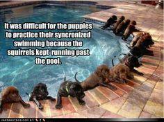 funny dog pictures - Swim Team