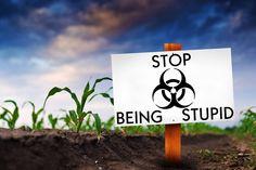 6 Bad Arguments The Make the GMO Debate Look Stupid