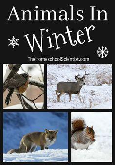 Animals In Winter - The Homeschool Scientist