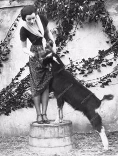 photo Greta Garbo and dog silent film Torrent 695-22