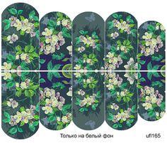 Слайдер-дизайн премиум, Цветы ufl165 - 1