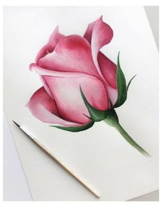 Realistic Flower Drawing, Simple Flower Drawing, Easy Flower Drawings, Beautiful Flower Drawings, Pencil Drawings Of Flowers, Pencil Art Drawings, Realistic Drawings, Colorful Drawings, Drawing Flowers