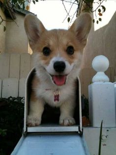 Don't get the wrong mail! the adorable wrong! ( this is so cute! I didn't now they now made corgi travel! First snail mail now Corgi travel! Cute Puppies, Cute Dogs, Dogs And Puppies, Corgi Puppies, Baby Animals, Funny Animals, Cute Animals, Small Animals, Small Dogs