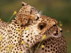 Beautiful Animals | beautiful+safai+animals+beautiful+animal+safari+cute+animal+images ...