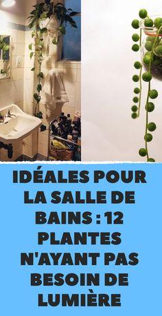 Idéales pour la salle de bains : 12 plantes n'ayant pas besoin de lumière