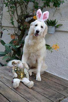 Easter Sarah  #sarah # dog #kuvasz