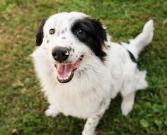 12 Imperative Border Collie Training Steps and Commands for Pet Owners