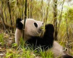 panda bambu Cartoon Panda, Panda Bear, Pandas, Animales, Panda