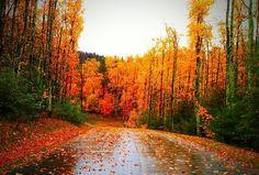 I want to explore North Carolina