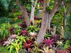 Gallery | Bromeliads NZ