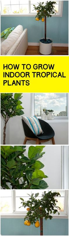 Tips and tricks to successfully planting tropical plants indoors- great ideas for tropical plants all year long!