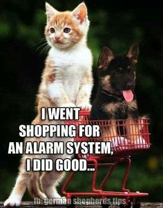 "Kitten pushing a German shepherd puppy in a tiny shopping cart:  ""I went shopping for an alarm system; I did good (sic) . . . 
