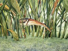 Florida waterbird: Least Bittern Art World, Lush, Florida, Watercolor, Artist, Animals, Pen And Wash, Watercolor Painting, Animales