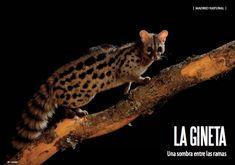 Es Madrid no Madriz Magazine Fauna, Madrid, Vii, Cats, Nature, February, Animales, Gatos, Naturaleza