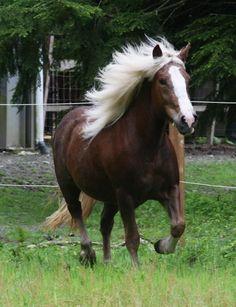 5 espectaculares e inusuales razas de caballos