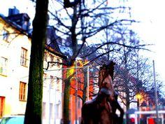 Matkojeni blogi: Yngling bestiger häst statyn, hevospatsas vuodelta 1956
