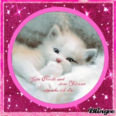 I wish you a good night. - I wish you a good night. Cute Animal Tattoos, Cute Animal Quotes, Cute Animal Drawings, Cute Animal Pictures, Super Cute Animals, Cute Funny Animals, Cute Baby Animals, Pets Movie, Cute Good Night