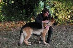 Rex Kangaroo, Dogs, Animals, Animales, Animaux, Pet Dogs, Doggies, Animal, Kangaroos