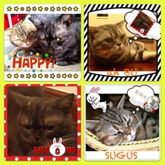 my lovely cats