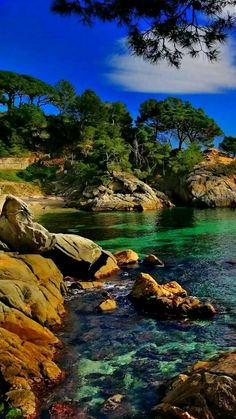 beautiful scenery, trees on a rocky shore with clear water Beautiful Nature Pictures, Nature Photos, Amazing Nature, Beautiful Landscapes, Beautiful World, Cool Pictures, Landscape Photos, Landscape Photography, Nature Photography