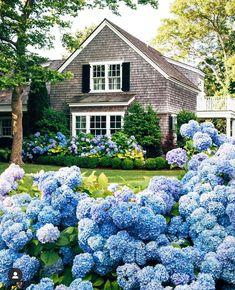 Hydrangea Season, Blue Hydrangea, Hydrangeas, New England Cottage, New England Homes, Nantucket Cottage, Cottage Style, Nantucket Island, French Cottage