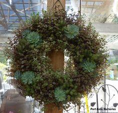 succulent wreaths | Succulent Wreath