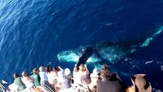 Whale and Dolphin Watching Cruises @ Davey's Locker Chartered Boats (Newport Beach, CA)