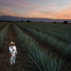 China is now 'central' to development of Tequila
